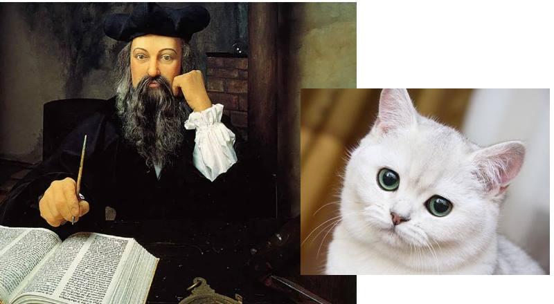 Нострадамус относится к кошкам с опаской