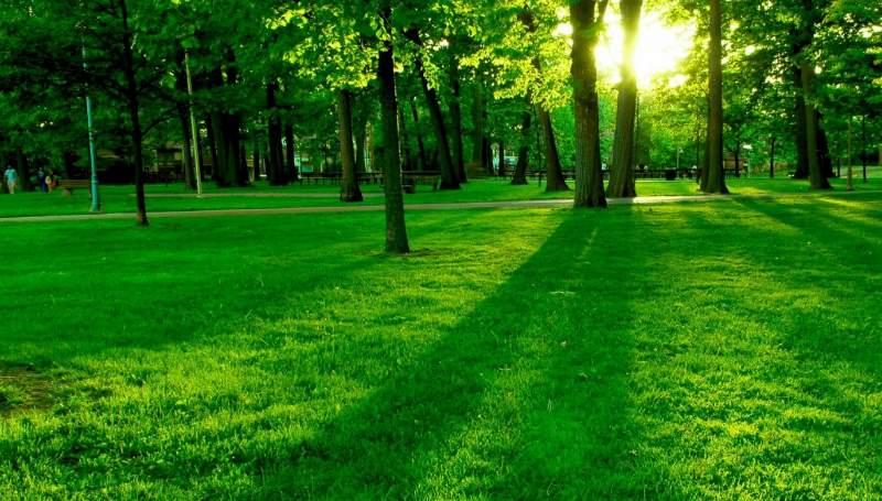 разглядывать зеленую лужайку — к прибыли