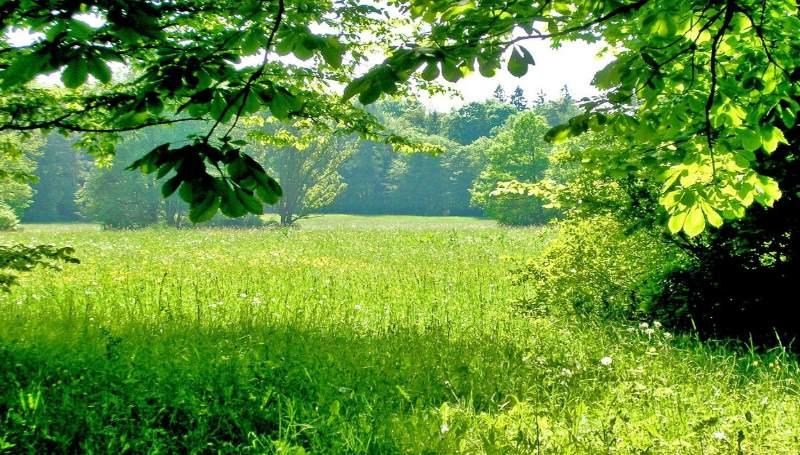 Лежать на траве — к дальней дороге