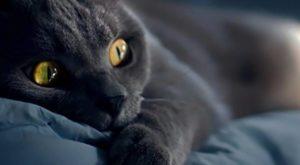 могут снятся коты
