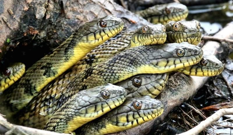 змеи из дупла