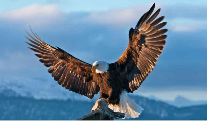 Если орел летит вам навстречу